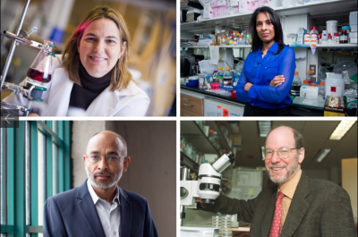 """Four MIT faculty are among the the 168 fellows of the National Academy of Inventors elected in 2015. They have been honored for their """"prolific spirit of innovation in creating or facilitating outstanding inventions that have made a tangible impact on quality of life, economic development, and the welfare of society."""" (Clockwise from top left): Angela M. Belcher; Sangeeta N. Bhatia; H. Robert Horvitz; and Emery N. Brown.  Credit: Belcher photo by Dominick Reuter. Bhatia and Brown photos by Bryce Vickmark. Horvitz photo by Donna Coveney."""