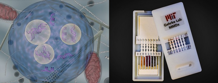 Left: Lipid nanoparticles (carrying siRNA) are shown as they are transported inside cells using endocytic vesicles. Image by: Daria Alakhova and Gaurav Sahay.   Right: Gehrke's lab is developing a diagnostic for Dengue virus, a relative to Zika. The device shown, which tested for Ebola, has silver nanoparticles of different colors that indicate different diseases. On the left is the unused device, opened to reveal the contents inside. On the right, the device has been used for diagnosis; the colored bands show positive tests. Photo courtesy of Jose Gomez-Marquez, Helena de Puig, and Chun-Wan Yen.