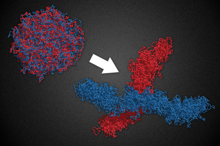 Shape And Form In Design : Study molecular motors shape chromosome structure institute for