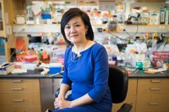 """""""…[I]f humans behave similarly to mice in response to this treatment, I would say the potential is just enormous, because it's so noninvasive, and it's so accessible,"""" says Li-Huei Tsai, the Picower Professor of Neuroscience, when describing a new treatment for Alzheimer's disease.  Photo: Bryce Vickmark"""